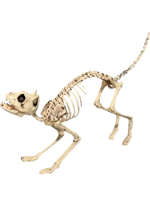 Skeleton Cat Props