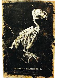 Bird Canvas Frame