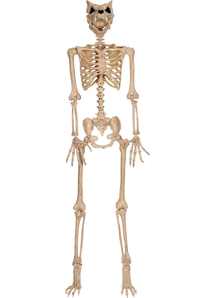 Werewolf Skeleton