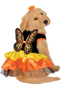 Butterfly Pet Costume for girl dogs