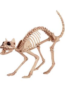 Cat Skeleton Prop.
