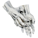 Hands Skeleton White